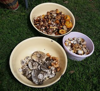 Edible mushrooms gathered by Elena Photo credit: Wellesley Baikal Research Team