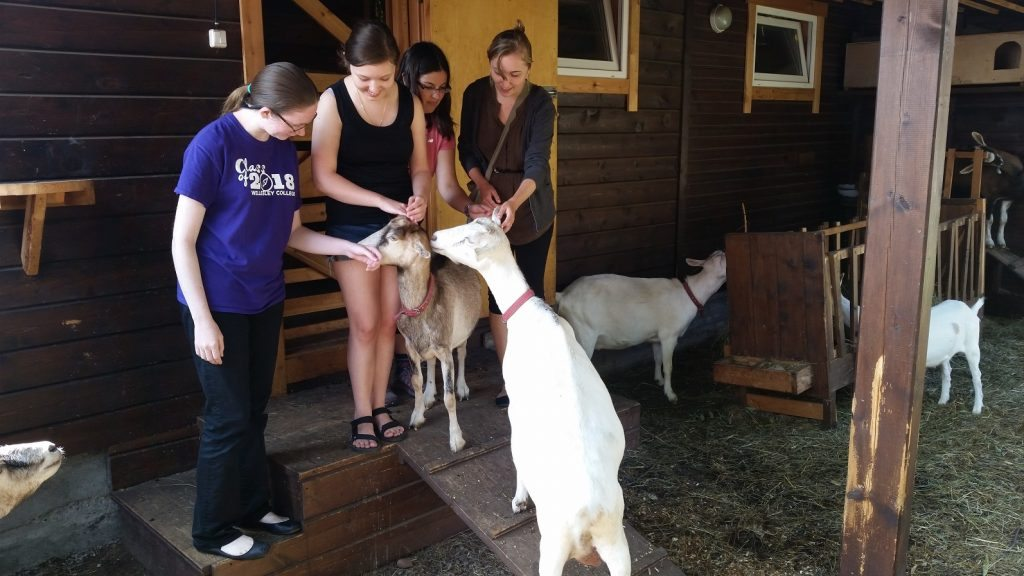 Meeting the goats at Irina's estate Photo credit: Wellesley Baikal Research Team